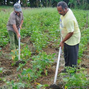 Las tierras cultivables están pasando de forma gratuita de las manos del Estado a la de los campesinos.